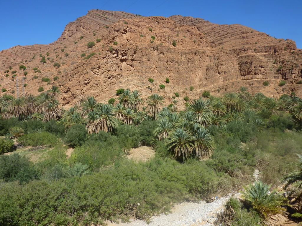 Les oasis du désert marocain